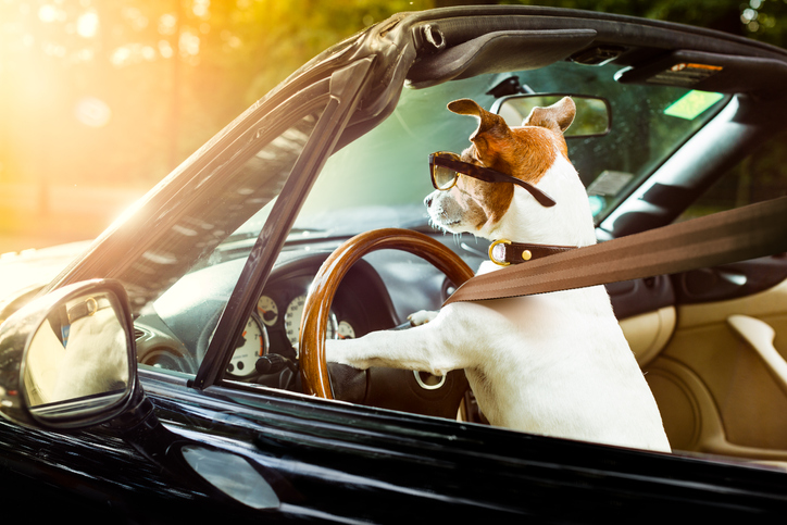 National Pet  Safety Travel Day
